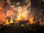 Kebakaran di Gunung Merbabu Hanguskan Bunga Edelweis