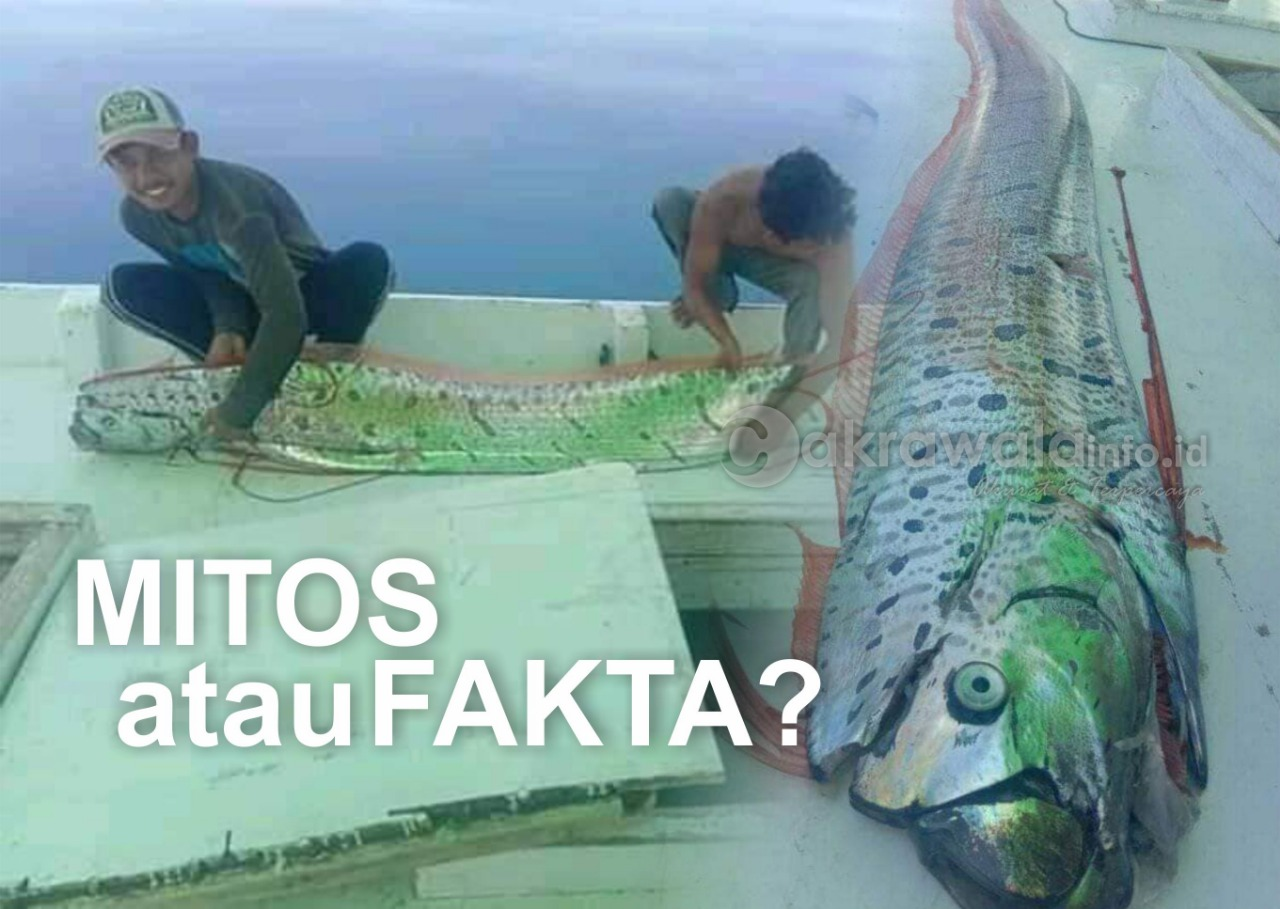 Fakta atau Mitos?, Hasil Mancing Ikan Oarfish Warga Selayar Disandingkan dengan Bencana Alam